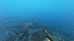 SpearFishing_2